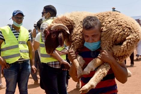 مستجدات الحالة الوبائية في المغرب يوم الأحد 26 يوليوز