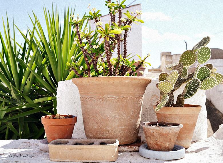 Composiciones con plantas para el exterior nika vintage for Macetas plantas exterior