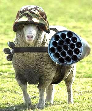 Dealing with sheep with a loose cannon...
