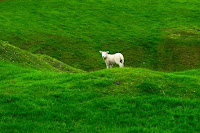 Lamb Photo by Felix on Unsplash