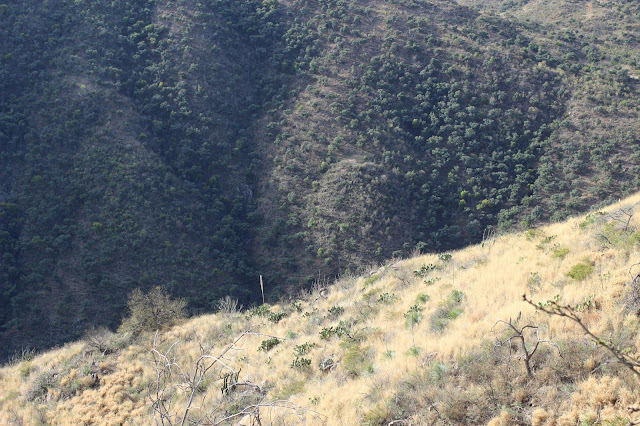 Guided%2BCoues%2BDeer%2BHunts%2Bin%2BSonora%2BMexico%2Bwith%2BJay%2BScott%2Band%2BDarr%2BColburn%2BDIY%2Band%2BFully%2BOutfitted%2B20.JPG
