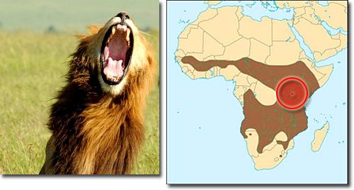 Leões - Rugido 3D em todas as direções