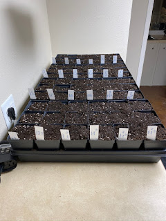 Seeds Have Been Started in the Laundry Room