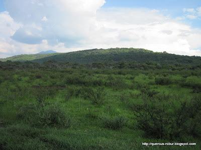 Cerro Viejo - La Bola vista desde el extremo oeste
