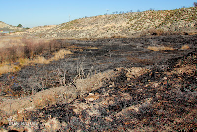 Zona de la Reserva Natural del Mar de Ontígola afectada por el incendio.