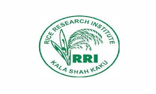 Rice Research Institute Jobs 2021 in Pakistan