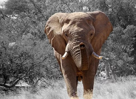 biggest animals in the world, pictures of the biggest animals in the world, which is the biggest animals in the world, top 10 biggest animals in the world, 10 biggest animals in the world, pictures of biggest animals in the world, biggest animals in the world videos,