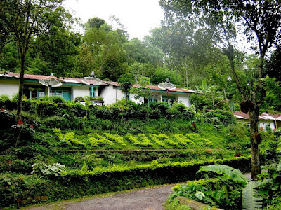 Wisata di Situbondo (kebun kopi kayu mas