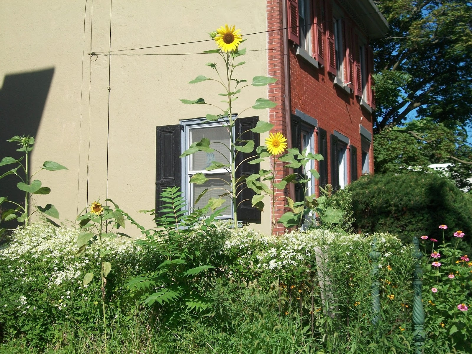 Bloom Where You 39 Re Planted Urban Gardening In Philly