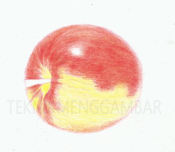 Teknik Menggambar Buah Apel