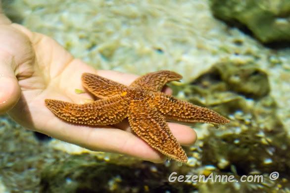 dokunma havuzunda ömrümde ilk defa bir deniz yıldızına dokundum, İstanbul Akvaryum