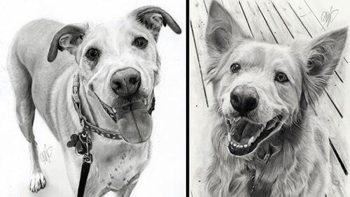 00-Dog-Portrait-Dan-Pietens-www-designstack-co