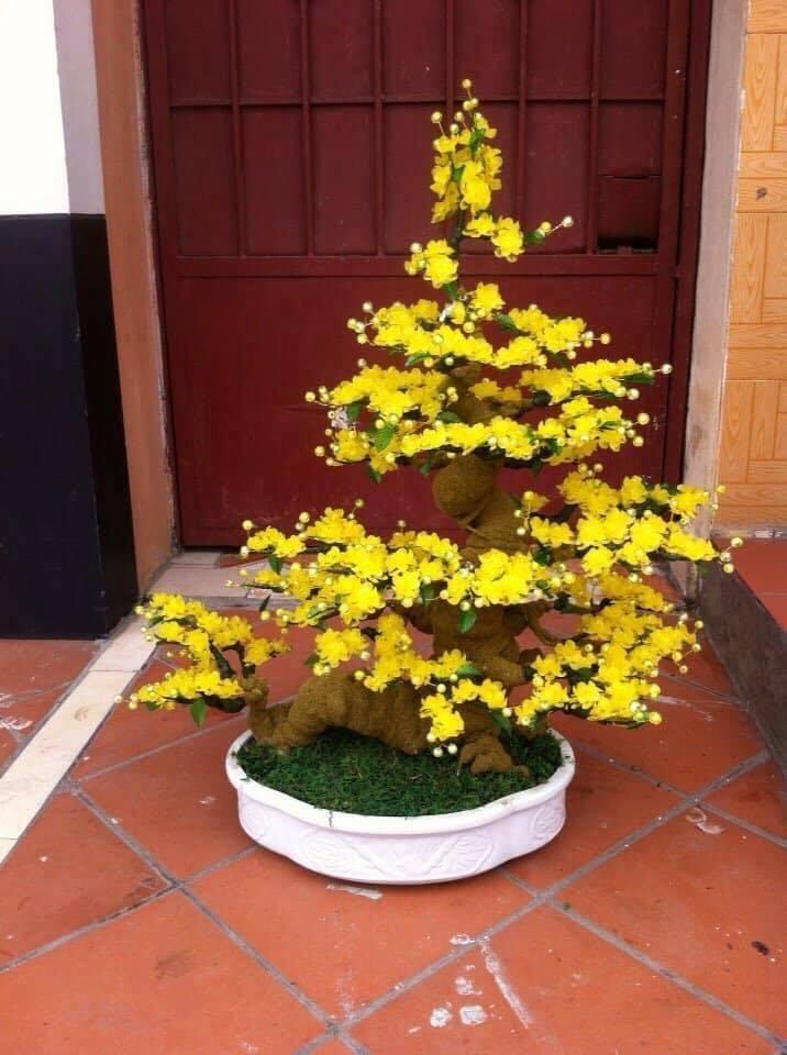 Goc bonsai mai dao the rong tai Vo Thi Sau