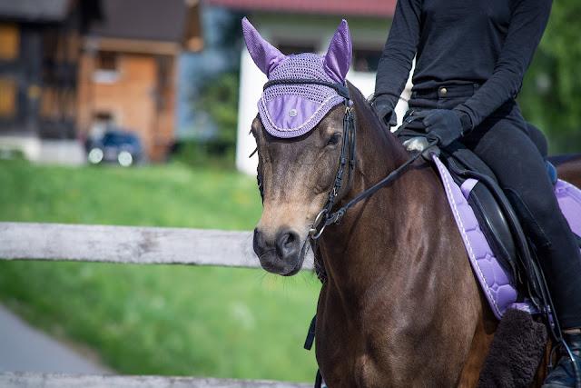Jak oduczyć konia twardego w pysku stawiania oporu?