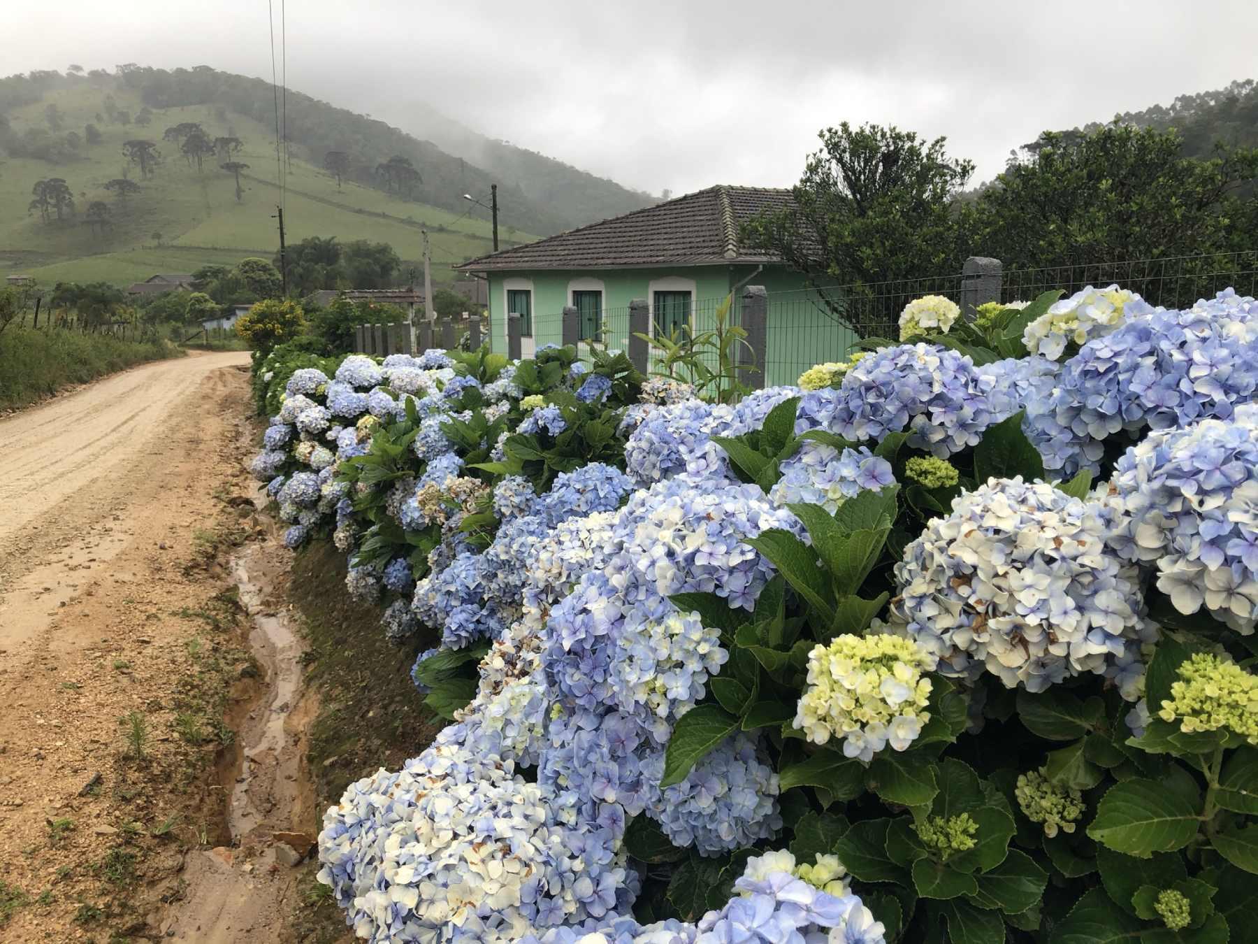 Flores no Caminho - Santa Catarina