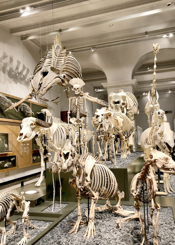 Hessisches Landesmuseum Natur