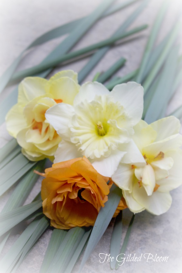 Yellow Daffodils and Orange Ranunculus- www.gildedbloom.com #floralphotography