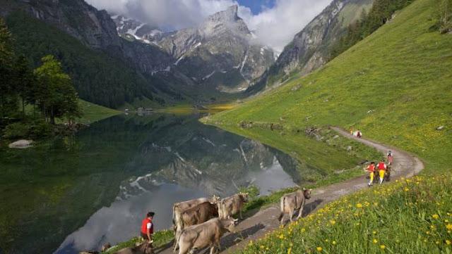Tempat untuk Dikunjungi bersama Anak-Anak: Apenzell, Swiss
