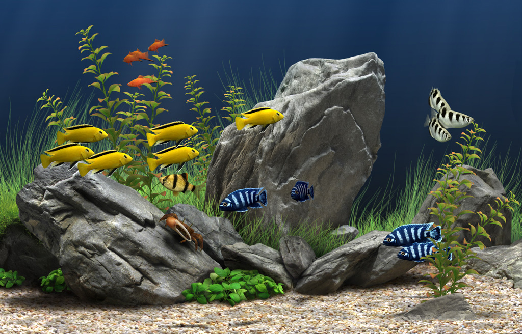 Rekomendasi Ikan Hias Kecil Yang Cocok Untuk Aquarium Kecil Ikanesia Id