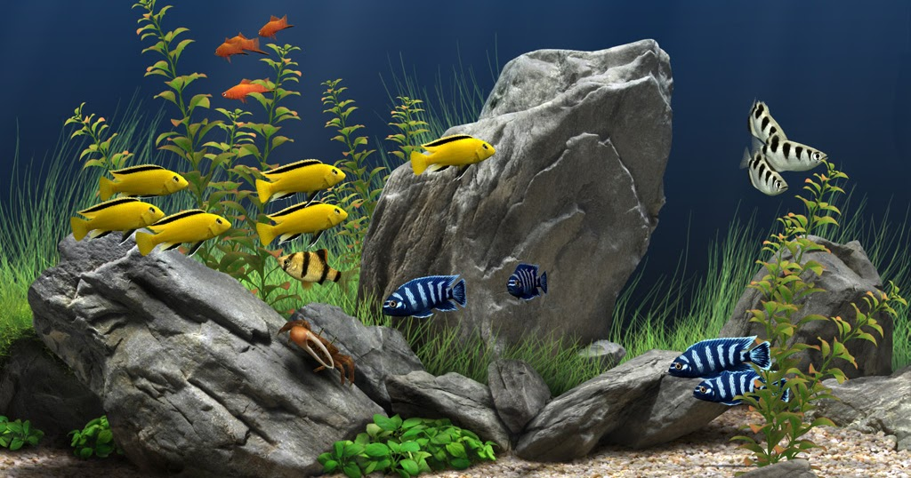 Rekomendasi Ikan Hias Kecil Yang Cocok Untuk Aquarium Kecil - Ikanesia.id