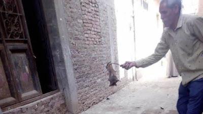 حملة للتخلص من خفافيش في قرية مصرية