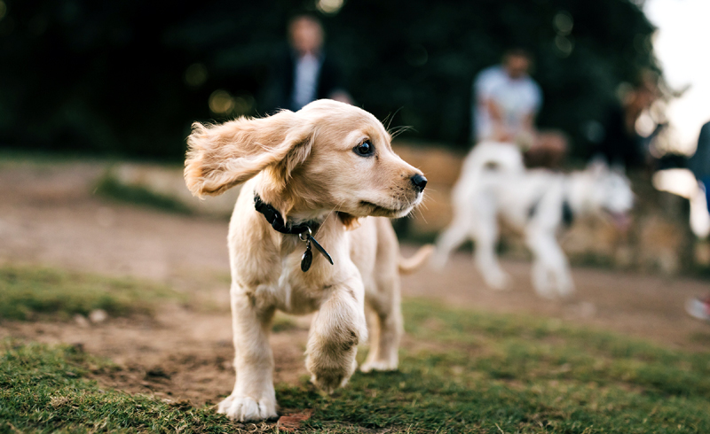 What You Need to Know About Caring for Your Pets During the Coronavirus Pandemic
