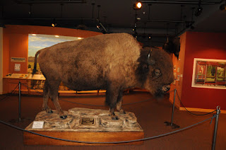 bison, Wyoming State Museum