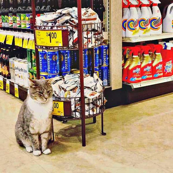 store cat portland