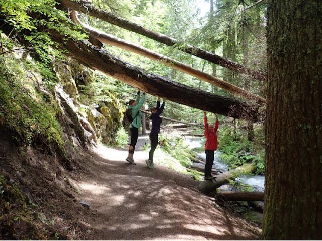 three women on a trail beneath a fallen tree