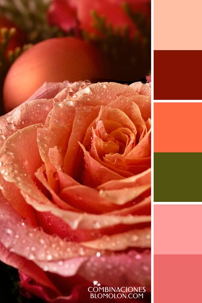 combinacion_de_colores_variedad_de_temporada_3