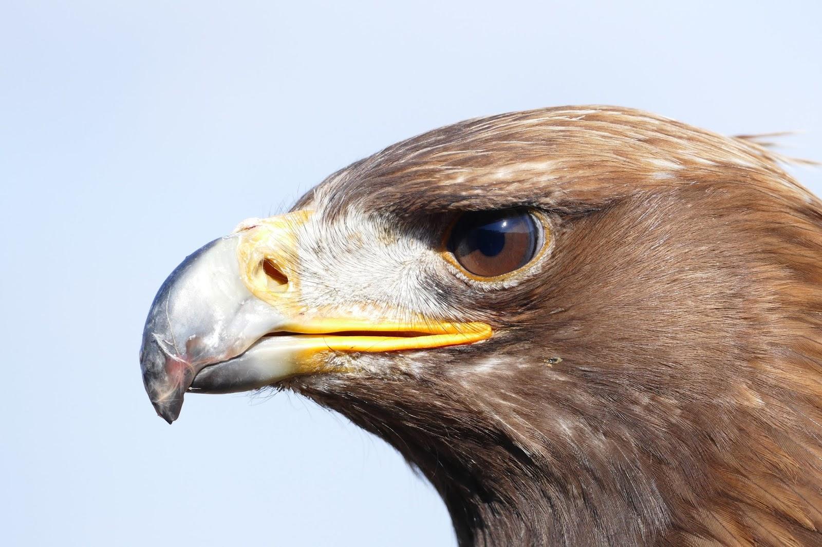 Seven Principles Of An Eagle - Dr. Myles Munroe OBE