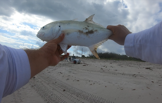Anglers, East Coast, Fish Reports, Fishing, Fishing Reports, Florida Fishing, Florida Surf Fishing, Surf Fishing,