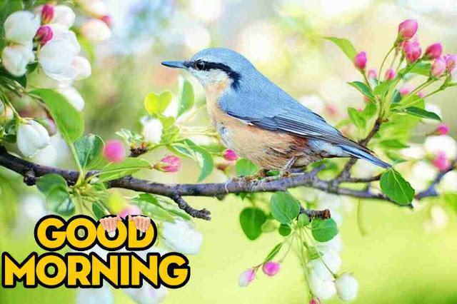 Awesome good morning image of nature bird