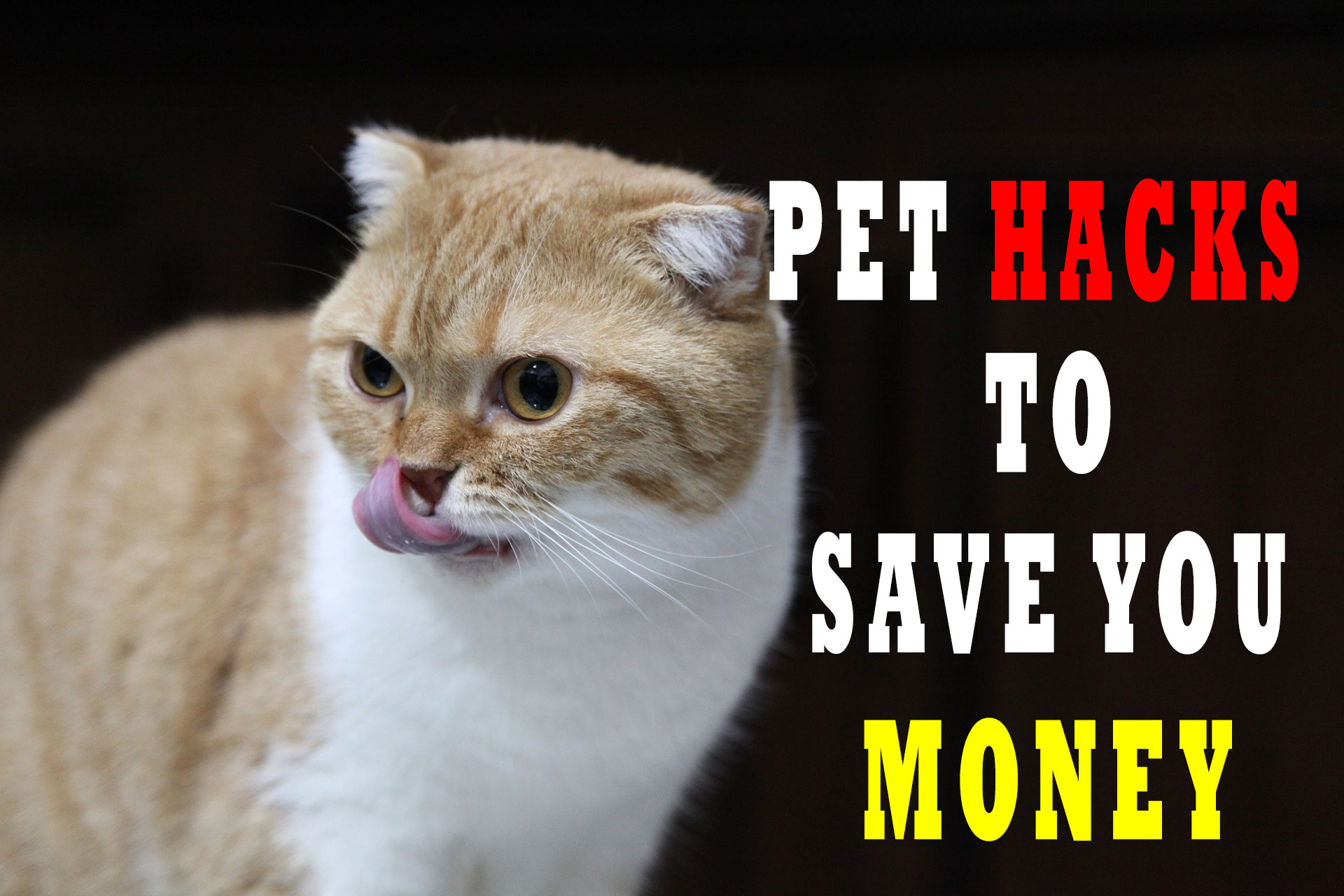 Pet Hacks To Save you Money
