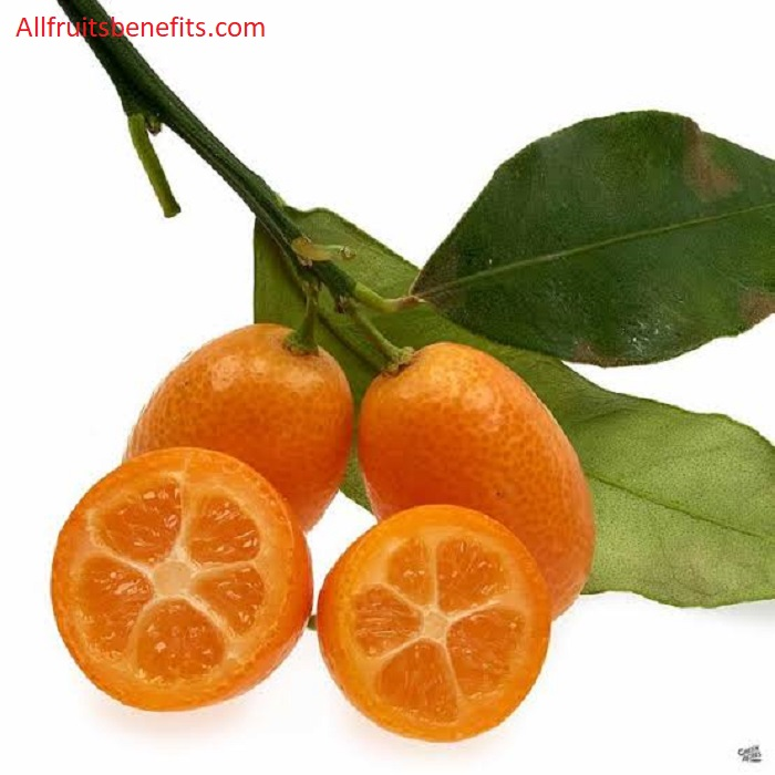 kumquat benefits,kumquat health benefits,kumquat fruit benefits,kumquat nutritional value,kumquat tea benefits,salted kumquat benefits,benefits of eating kumquats,kumquat honey benefits,kumquat juice benefits