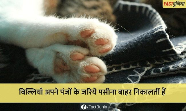 cat-paws-nature-animal-fact-hindi
