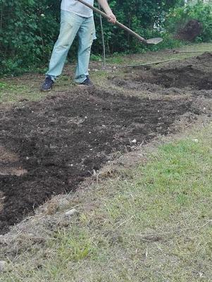 interrare il compost nell'orto biologico