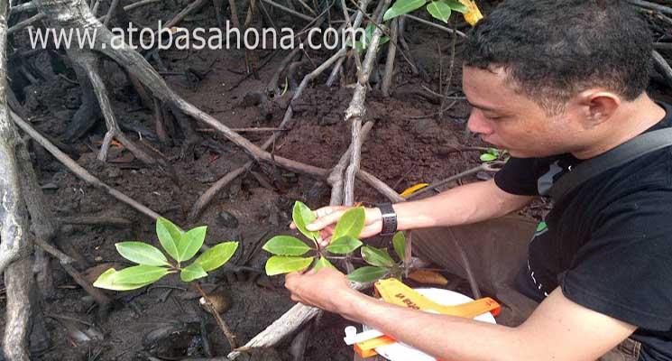 Pengantar Taksonomi Tumbuhan