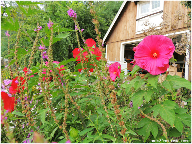 Flores de la Granja Kimball en Massachusetts