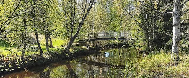 Pattijoki