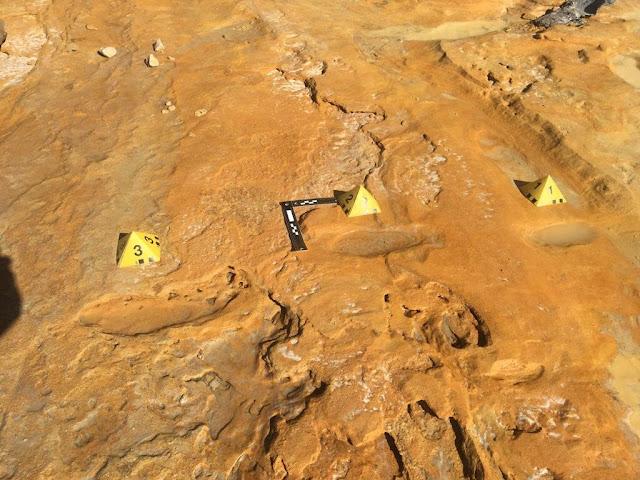 Fossilized footprints reveal prehistoric elephant nursery in south west Spain