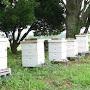 Photo d'une rucher
