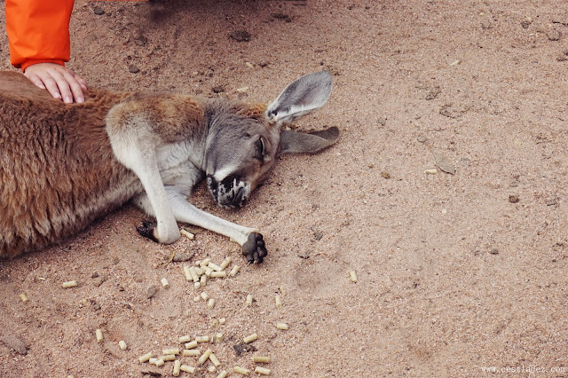 Caversham Wildlife Park Australia Perth