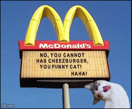 Photoshopped Cat picture • No, you cannot has cheezburger, you funny cat! HaHa!