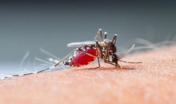 Penyebab orang digigit nyamuk