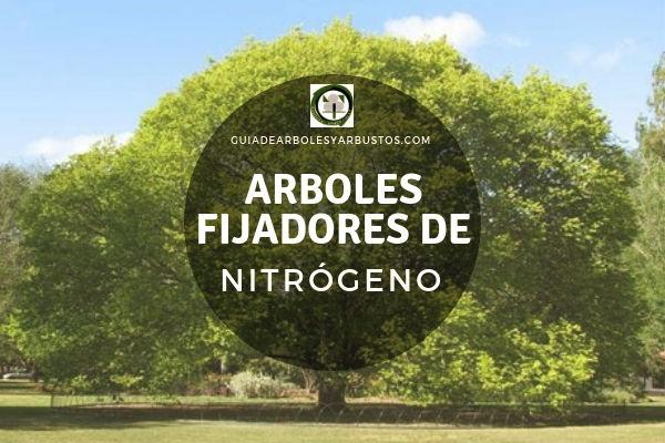 Lista de Géneros de Arboles Fijadores de Nitrógeno en la Guía de Arboles y Arbustos.