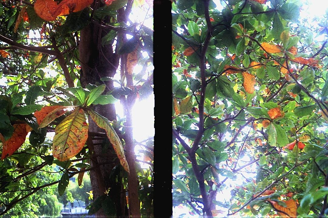 In Half-Frame Mode, Canon Autoboy Tele 6 04
