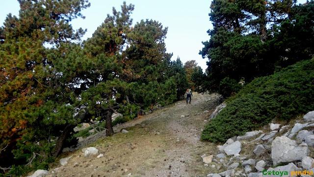 Ruta circular al Pic de Costa Cabirolera, techo de Barcelona desde el Coll de les Bassotes.