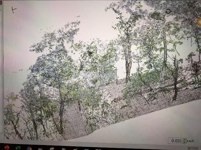 絶滅危惧種オニヒョウタンボク生息地の間伐 before & after レーザー3D測量写真