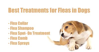 Flea treatment in dogs
